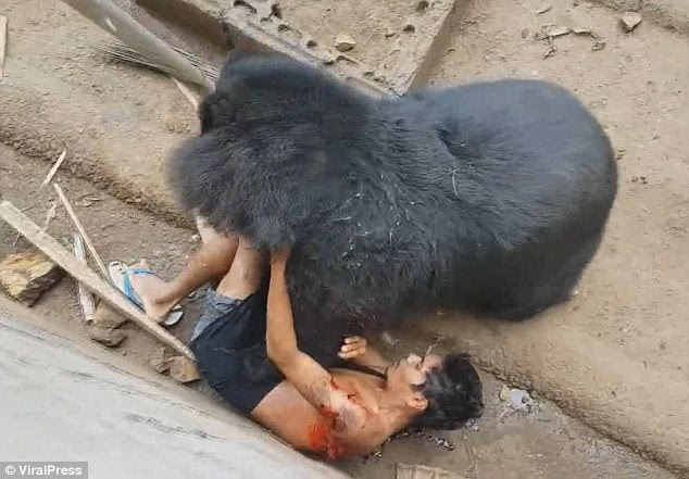 Tourist who teased a bear by dangling food in its jaws is gored and dragged inside the beast's enclosure but miraculously survives