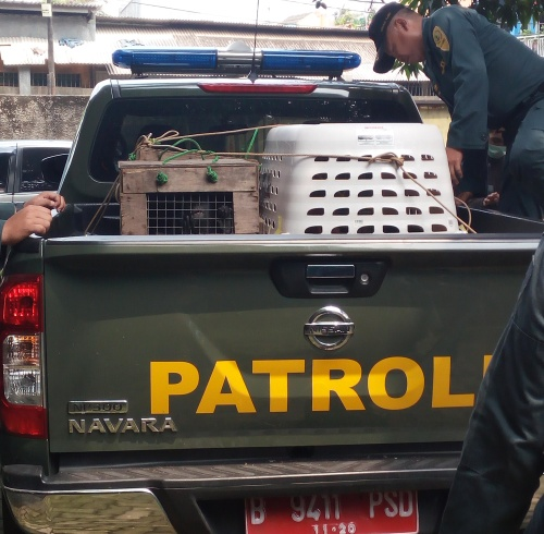 Scorpion Appreciates MoEF's Law Enforcement Agency for Rescuing Four Protected Primates in Jakarta (September 4, 2017)