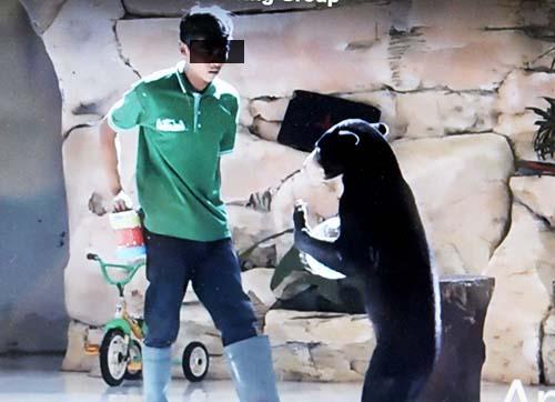 Exploitation of Orangutan and Sun bear at Lembah Hijau Zoo (Sumatra) Discontinued (September 18, 2017)