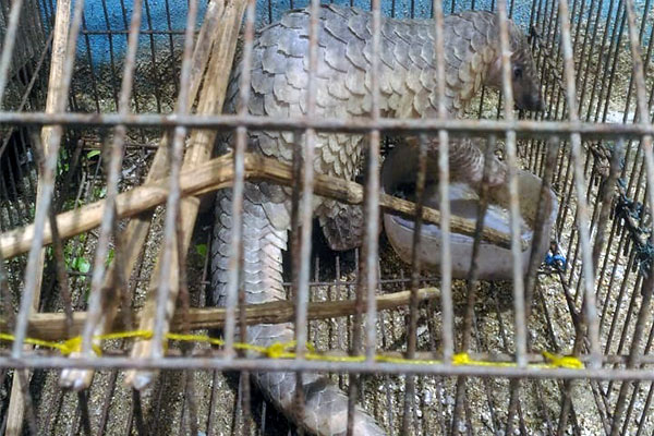 Supplier of Pangolin Scales to Medan (April 23, 2020)
